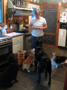 Katherine with her many dogs!  It was great to be around such great people and pets.