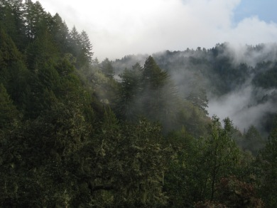 The clouds begin to clear to show the trees breathing out