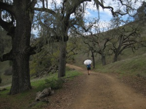 Classic Diablo range oak grassland savannah