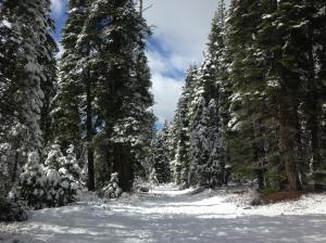 Beautiful hike in the snow near Lake Tahoe