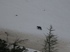 A bear also made it to the top of Park Creek Pass!