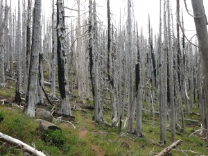 Miles of burnt forest