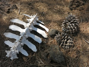 Death in Hat Creek Rim