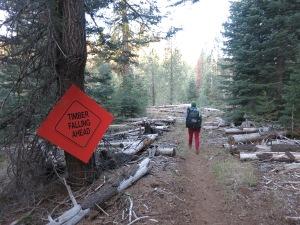 Logging on Trail