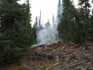 New wildfire, 20ft from the trail.