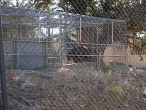 Cages with animals