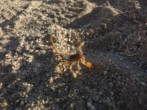 Scorpion!