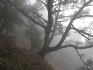 Fog in the Oaks